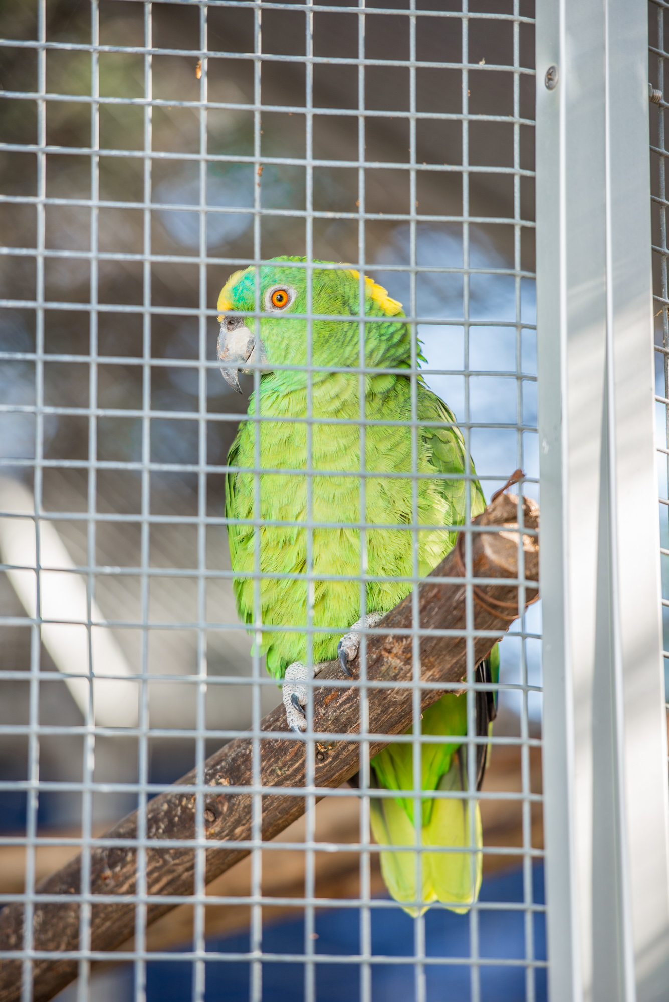 Austin Zoo (1 of 12)