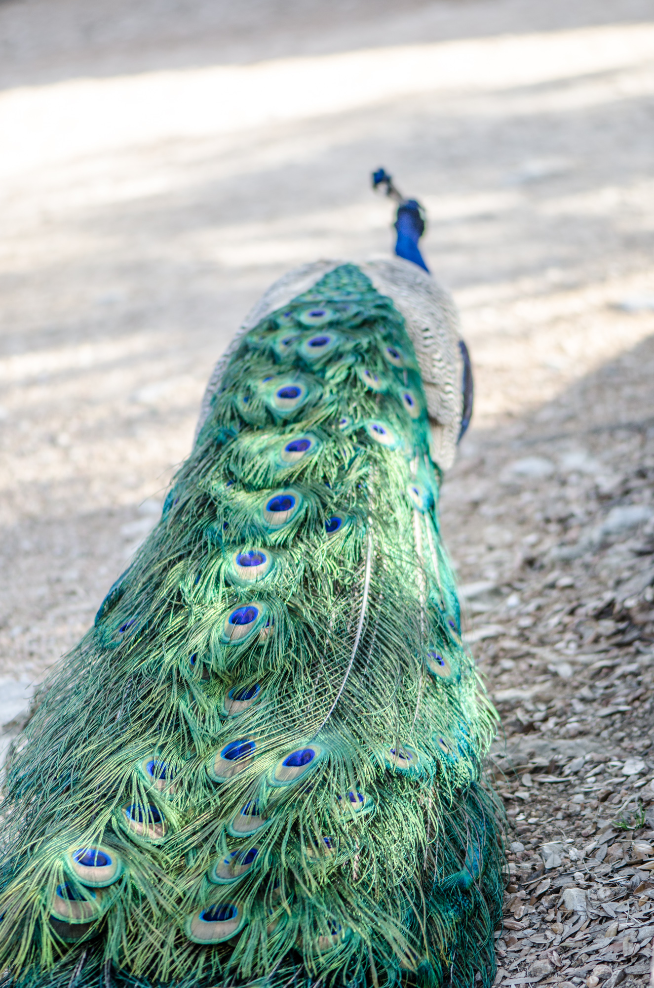 Austin Zoo (12 of 12)