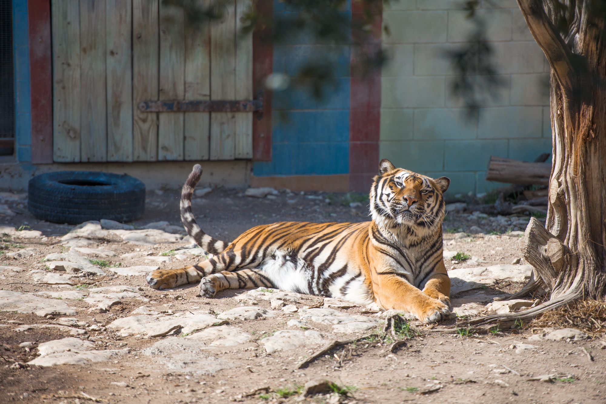 Austin Zoo (2 of 12)