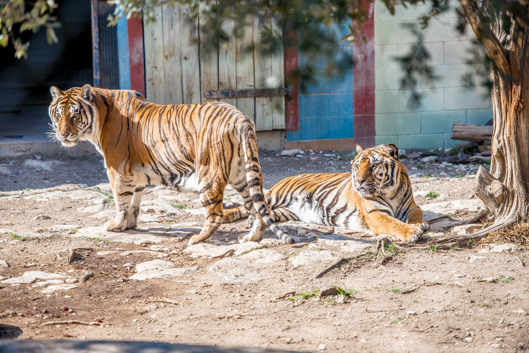 Austin Zoo (3 of 12)