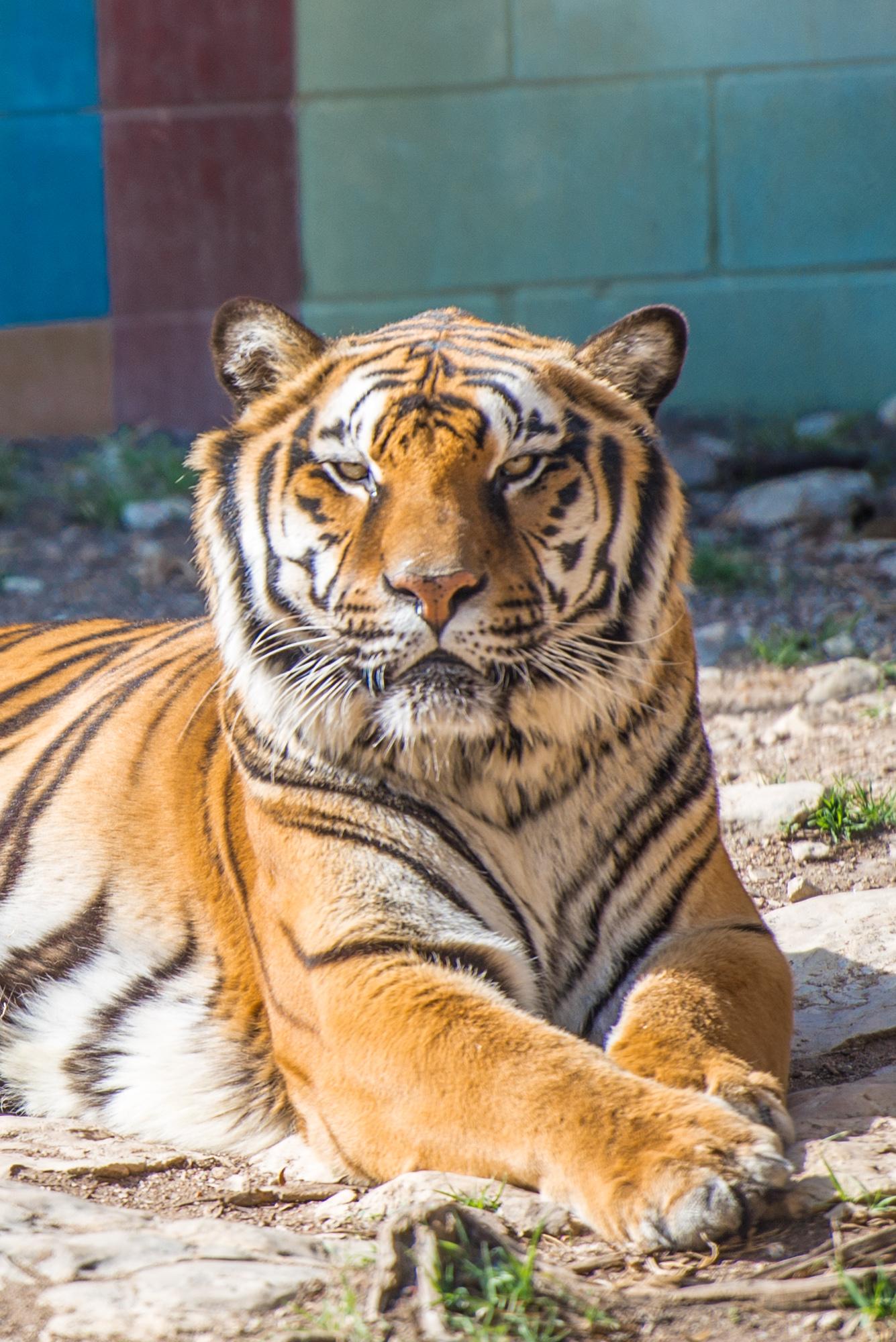 Austin Zoo (4 of 12)
