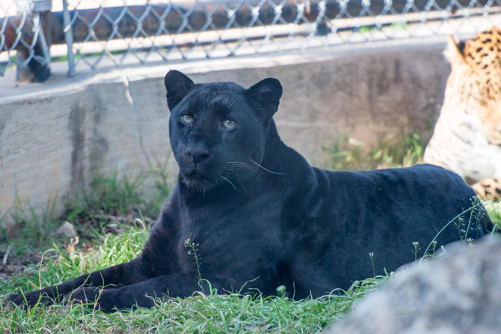 Austin Zoo (5 of 12)
