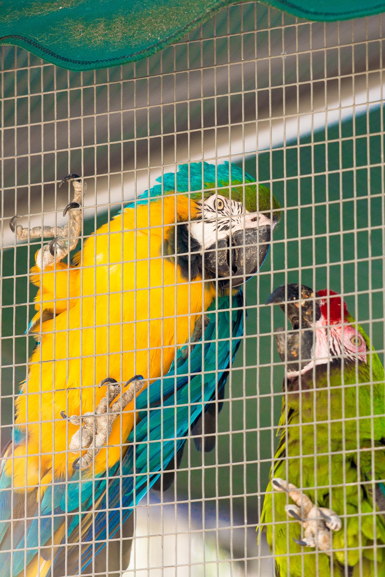 Austin Zoo (6 of 12)