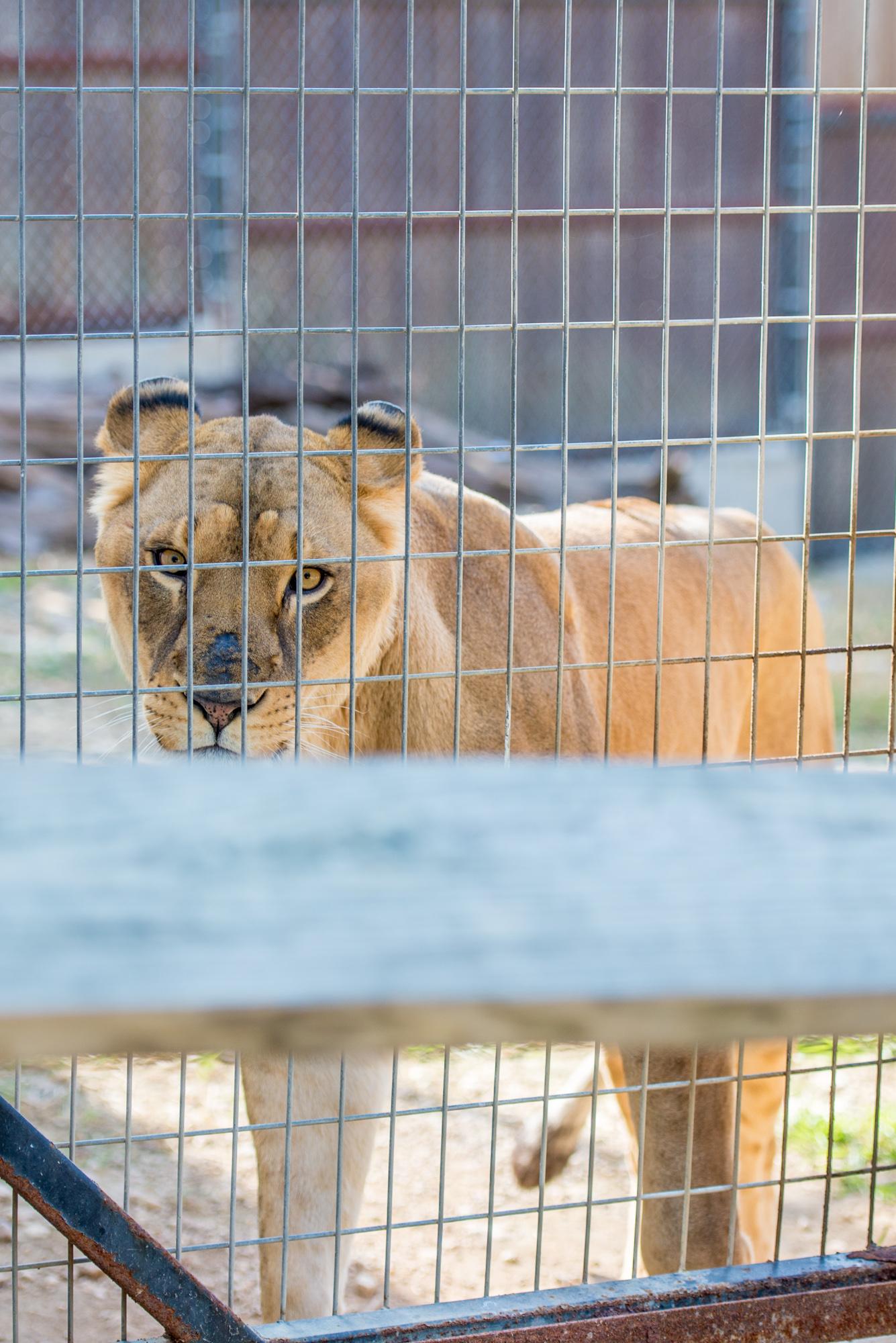 Austin Zoo (7 of 12)