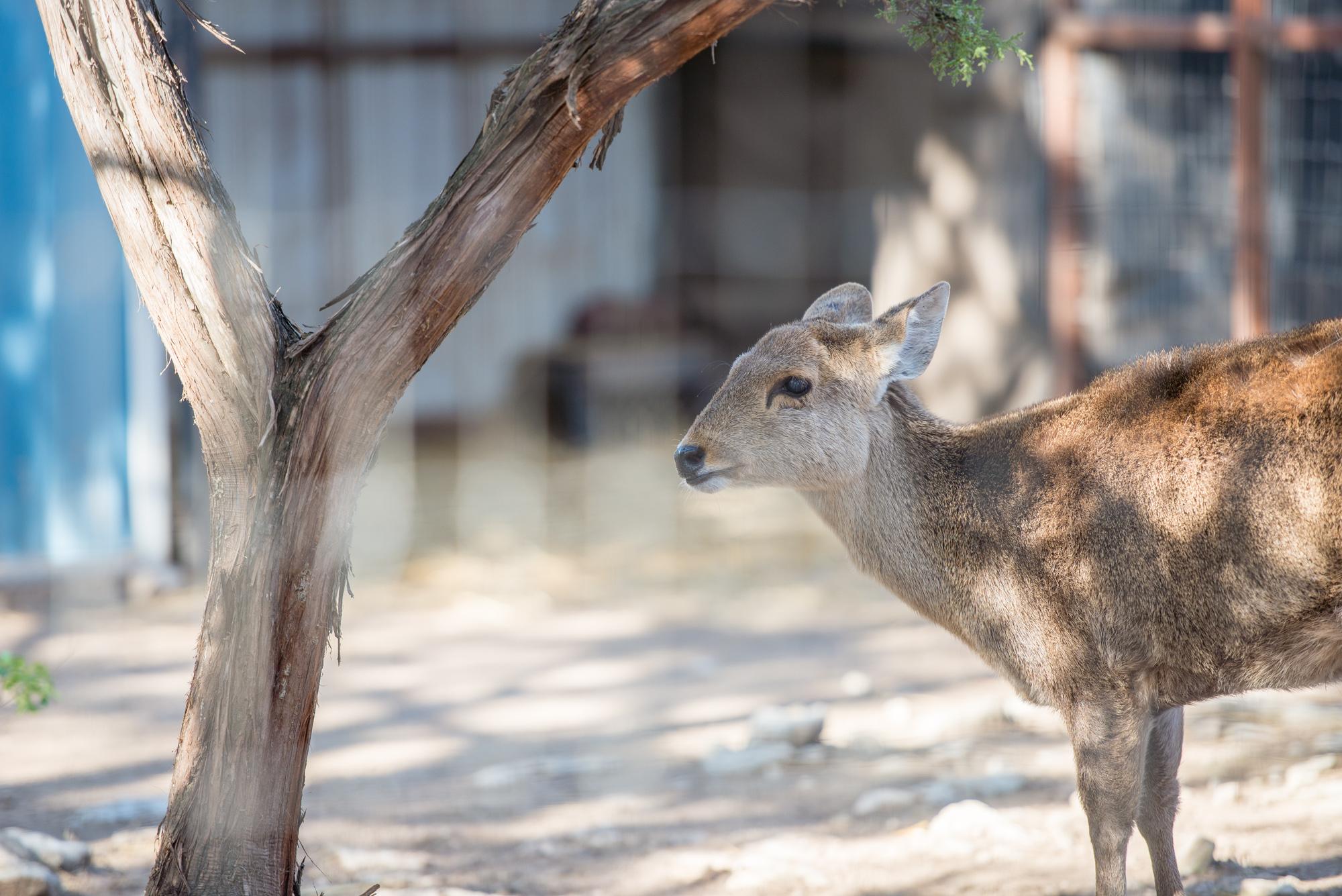 Austin Zoo (8 of 12)